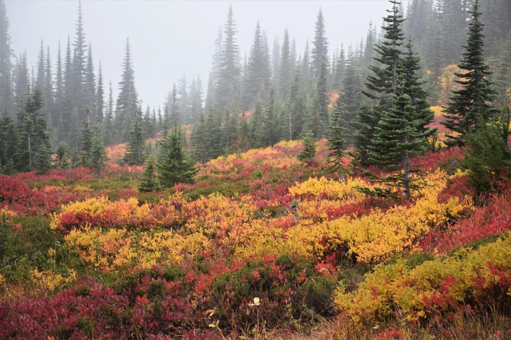 018Copyright 2018 Rolf C. Margenau-Mt. Ranier NP- Fall Colors
