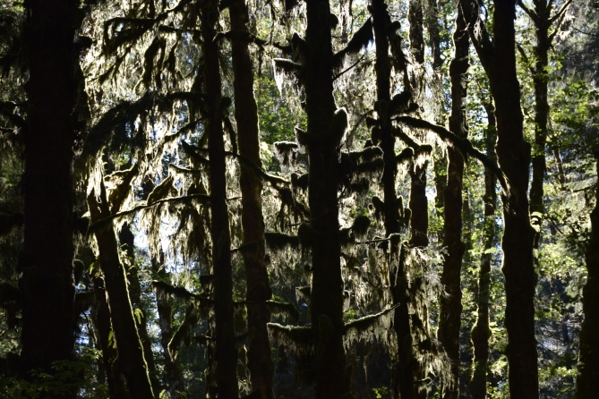 Copyright 2018 Rolf C. Margenau- Olympic NP-Hoh Rain Forest018