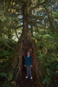 Copyright 2018 Rolf C. Margenau- Olympic NP-Quinault Rain Forest022 {seqn