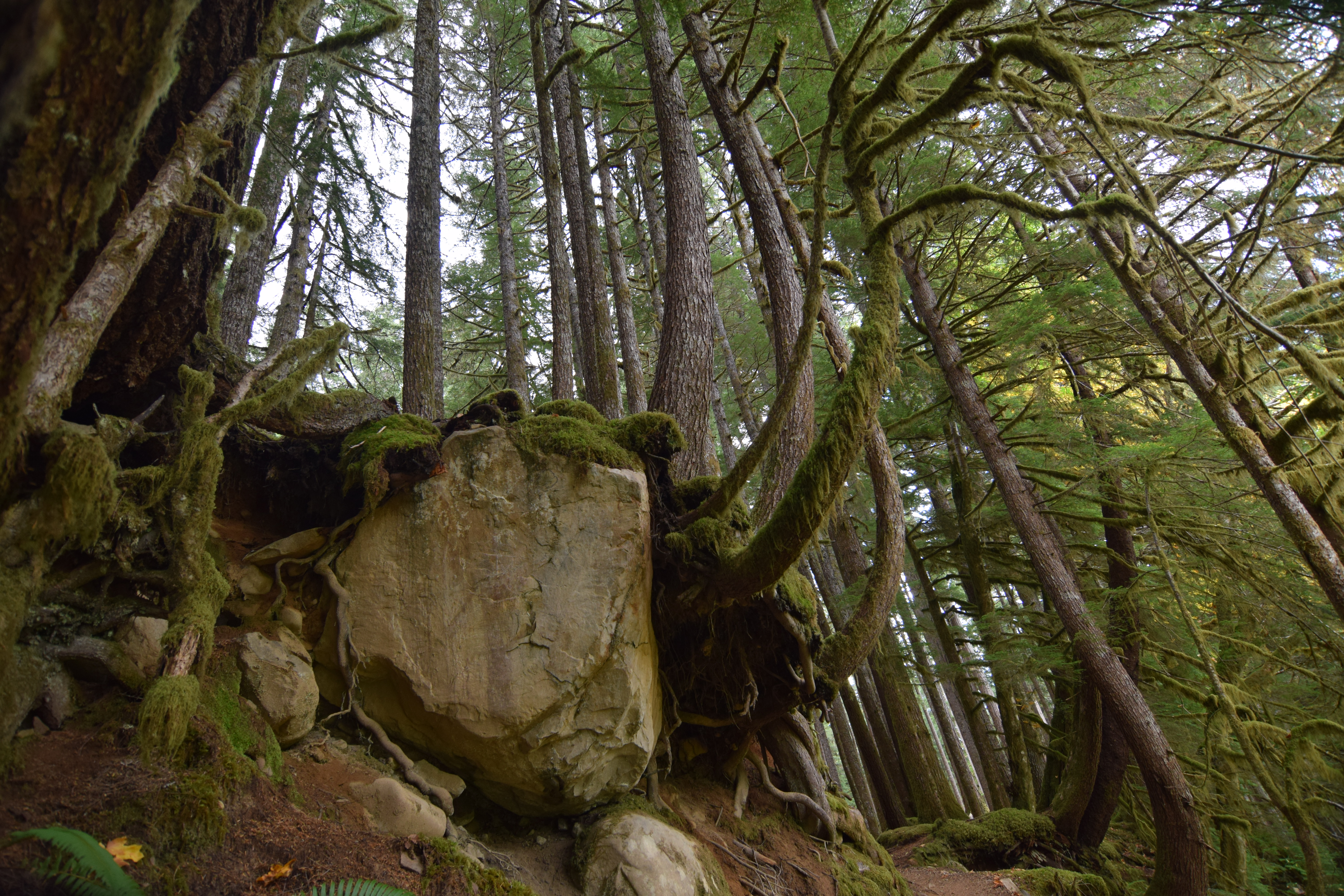 Copyright 2018 Rolf C. Margenau- Olympic NP-Sol Duc Waterfall-Ancient Groves023