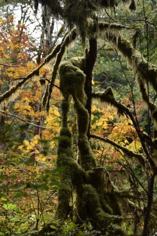 Copyright 2018 Rolf C. Margenau- Olympic NP-Sol Duc Waterfall-Salmon Cascade018A