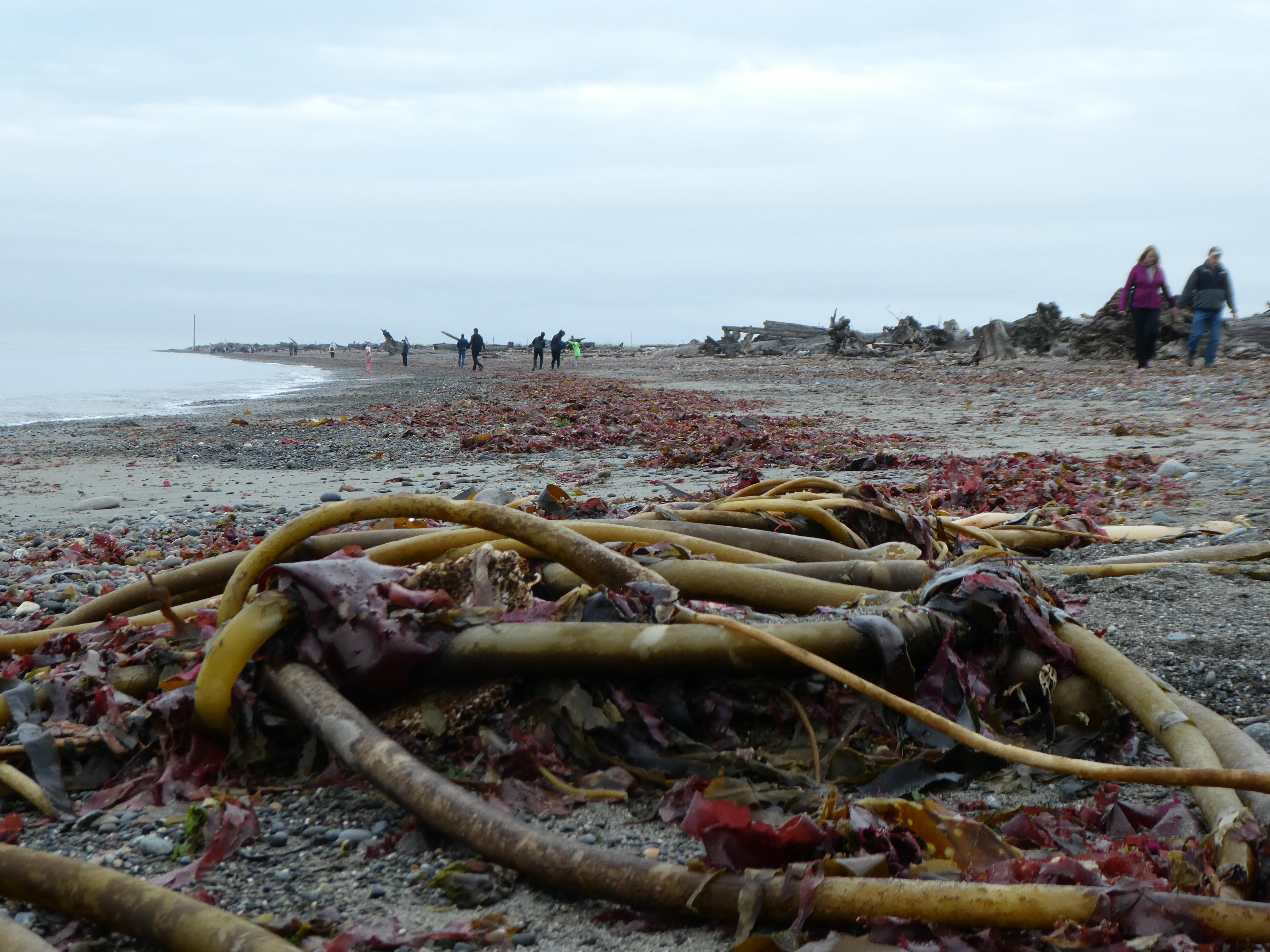 Copyright 2018 Rolf C. Margenau- Olympic Peninsula-Dungeness Wildlife Refuge036